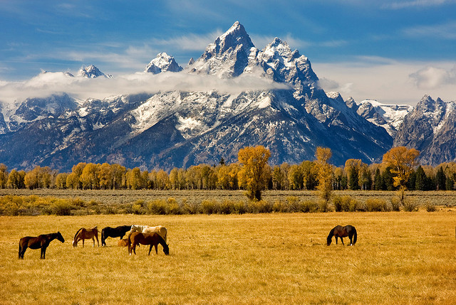 by Tucapel on Flickr.Horses in Grand Teton National Park - Wyoming, USA.