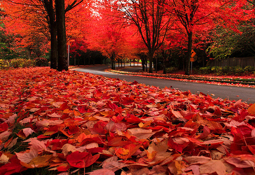 Autumn Leaves, The Cascades, Oregon