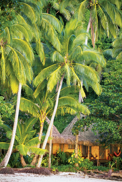 Palm trees over beach club hut, Qamea Island, Fiji